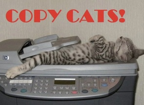 cat-scan-20100317-214115_3330268[1].jpg
