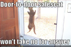 funny-pictures-salesman-cat-will-no-resized-600[1].jpg