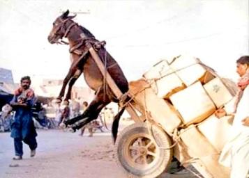 donkey-pulling-cart[1]